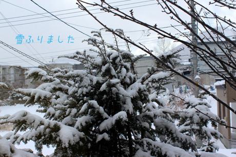 雪降りました