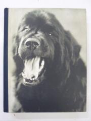 Gentle Giants(洋書 ブルースウェーバー犬写真集
