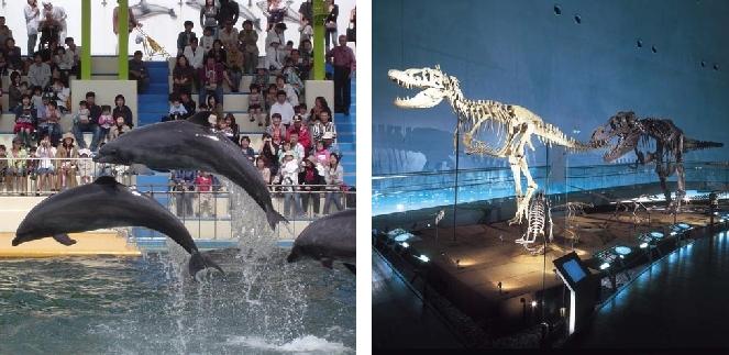 【恐竜博物館&越前松島水族館の入場券付き】