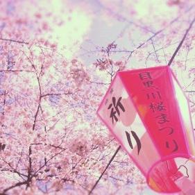 目黒川桜2012