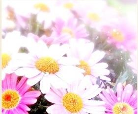 ピンク 花 画像
