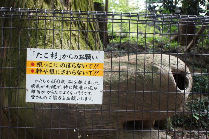 11-10-4-takao-021.jpg
