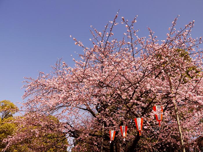 13-3-11-ueno-06.jpg