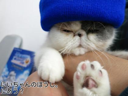 にぃちゃんの帽子