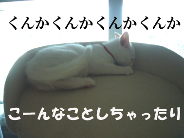 P1100921.jpg