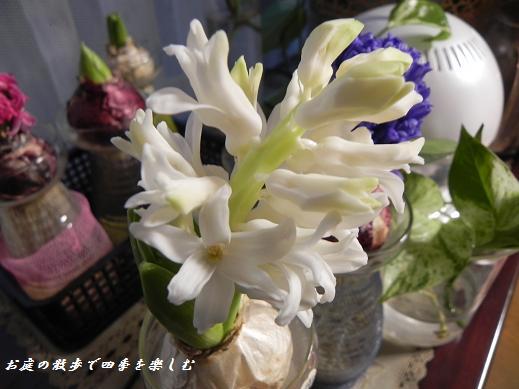 hiyasinsu11_20130207224427.jpg