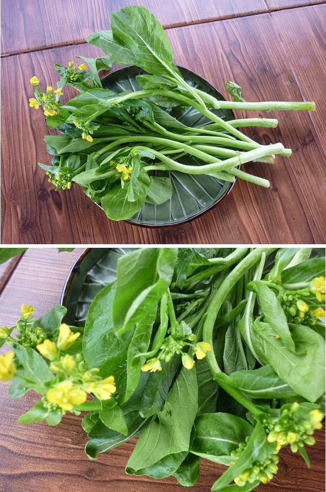 菜の花ブログサイズ