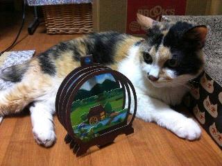 猫とカード