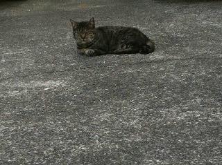 地域猫 おじいちゃん