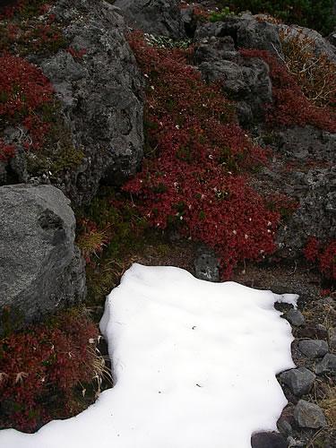 hitokoma2011-1010-4.jpg