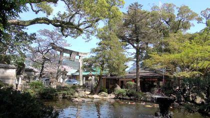 Sakura-10.jpg