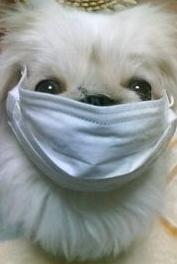 花粉症対策2