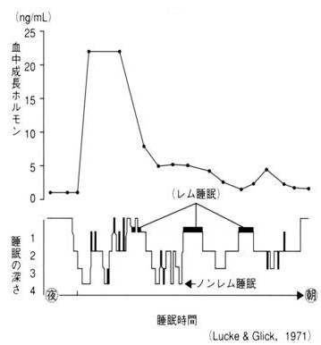 睡眠時間と成長ホルモン