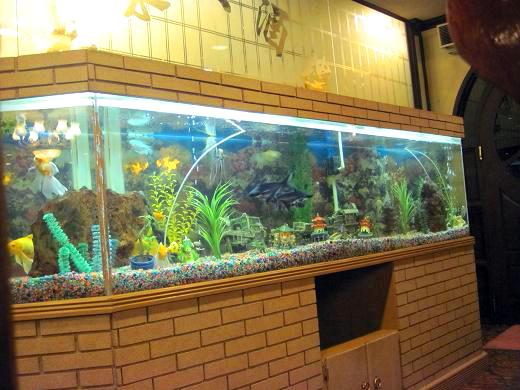 中華料理屋の水槽