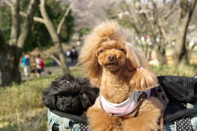 横浜お花見 317
