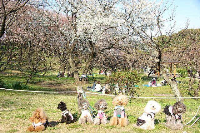 横浜お花見 438