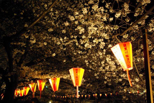 横浜お花見 764