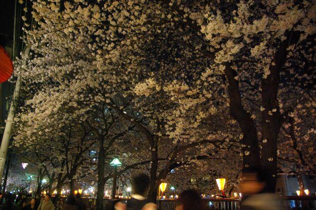 横浜お花見 687