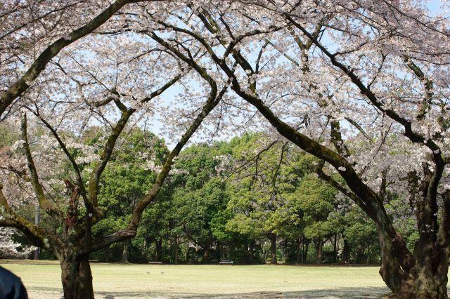 桜runrun 130