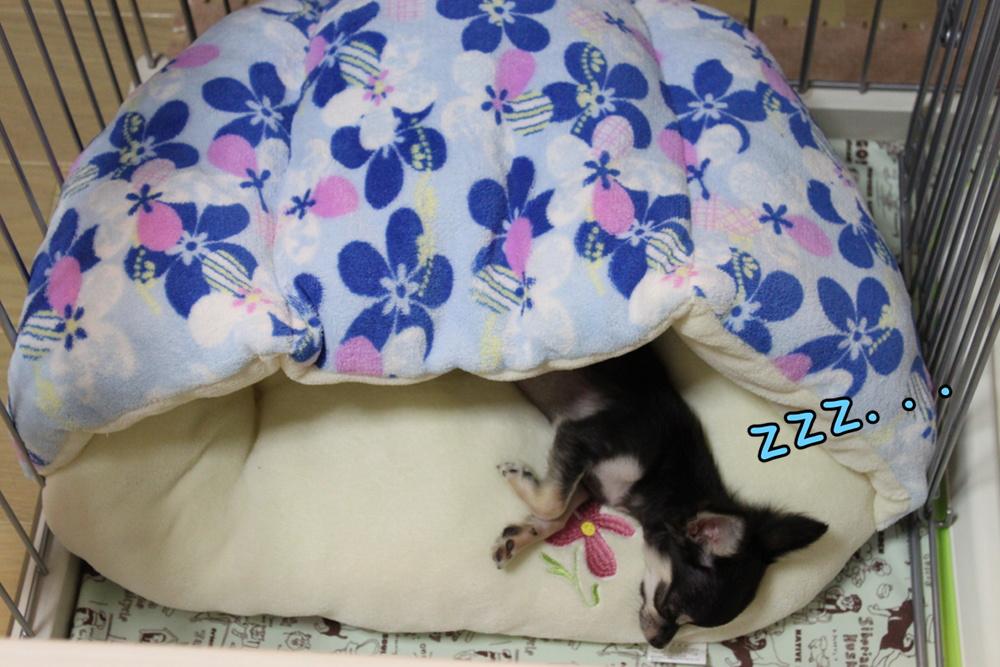 中でおやすみ