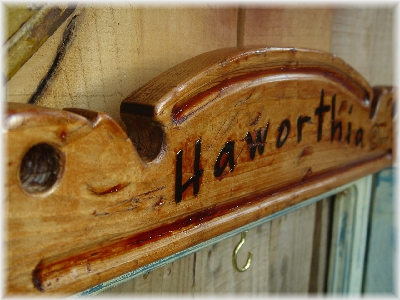 haworthia plate01