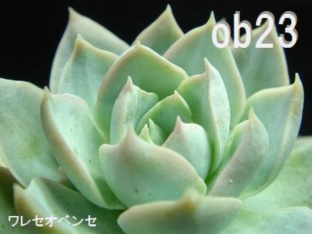 DSC08468-2.jpg