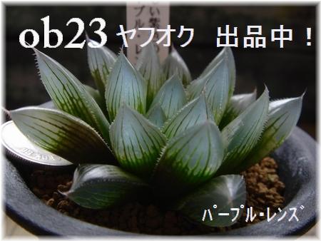 DSC08503-2.jpg