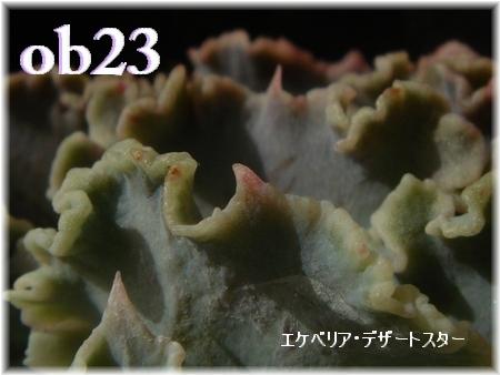 DSC08708-2.jpg
