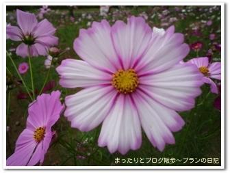 昭和記念公園(2)