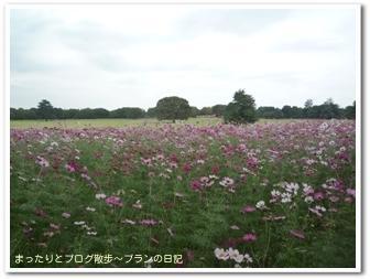 昭和記念公園(3)
