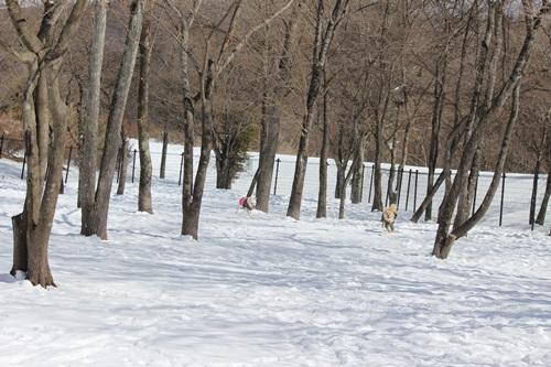 公園ラン1