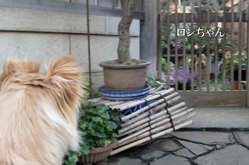 ろんちゃん