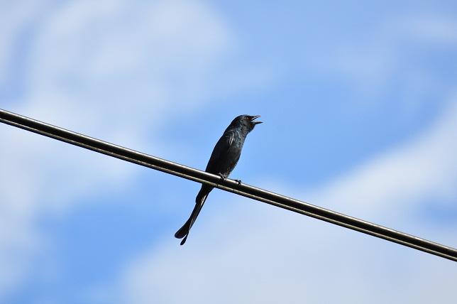 #20839;溝溪の鳥(2)