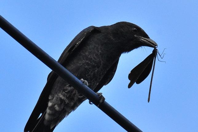 #20839;溝溪の鳥(1)