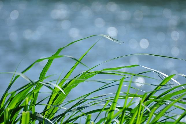 光り輝く川辺(2)