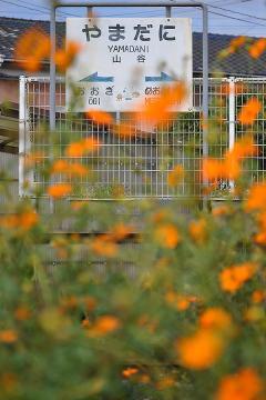 駅の光景_2011(10)