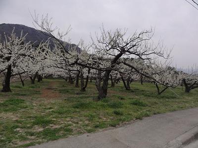 2012-04-13_16-50-17.jpg