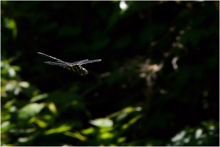 トンボの飛翔
