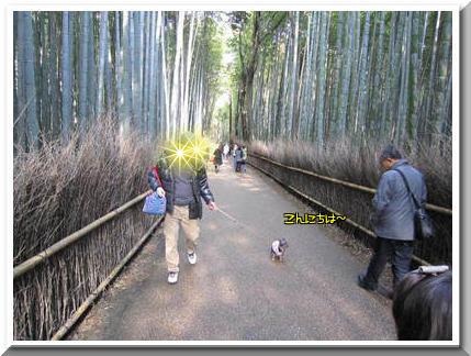 竹林の道とボイ君