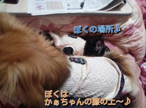 201312161045313fd.jpg