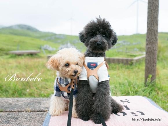四国カルスト 犬