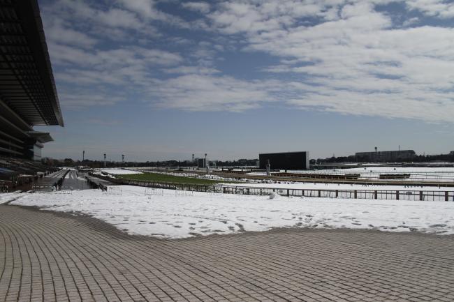 東京競馬場・雪1