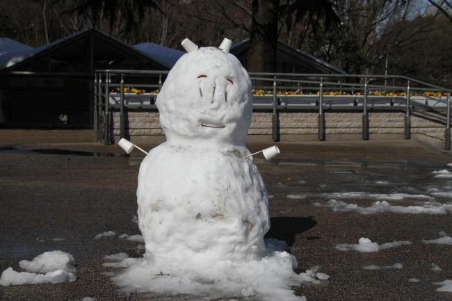 東京競馬場・雪4