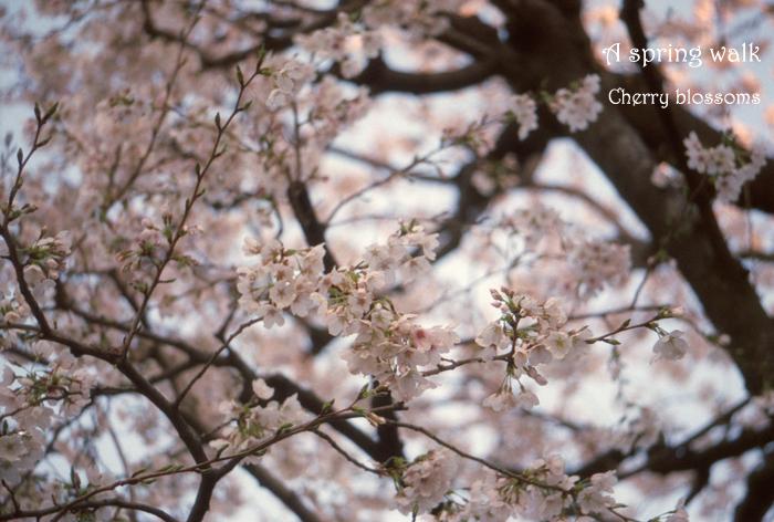 A spring walk 2