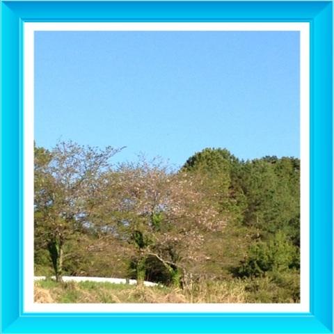 image_20130410213503.jpg