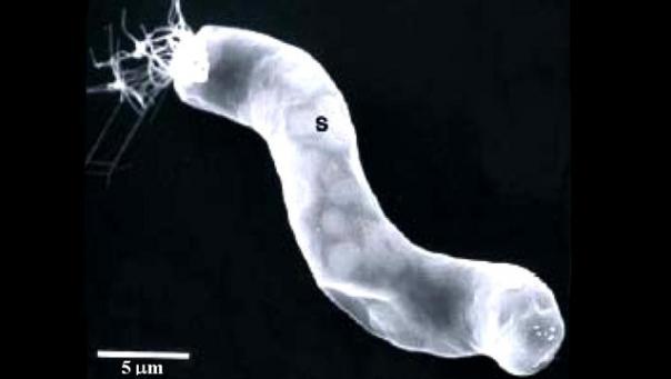 宇宙バクテリア.jpg