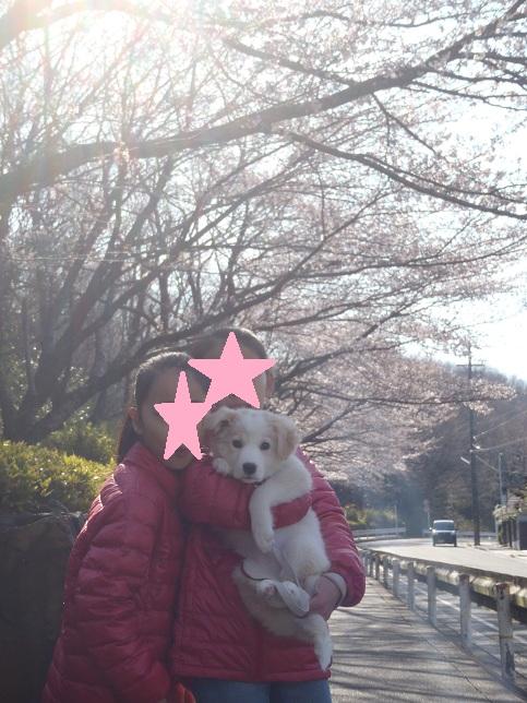 2012-4-8桜