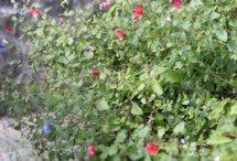 BOSCOのお庭