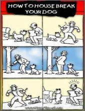 Animals+Say+It+Best_convert_20120415150641.jpg