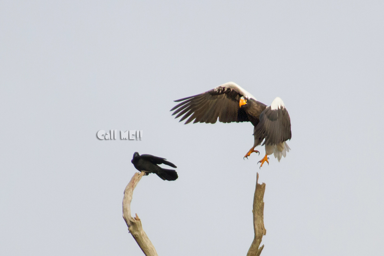 eagle1201.jpg
